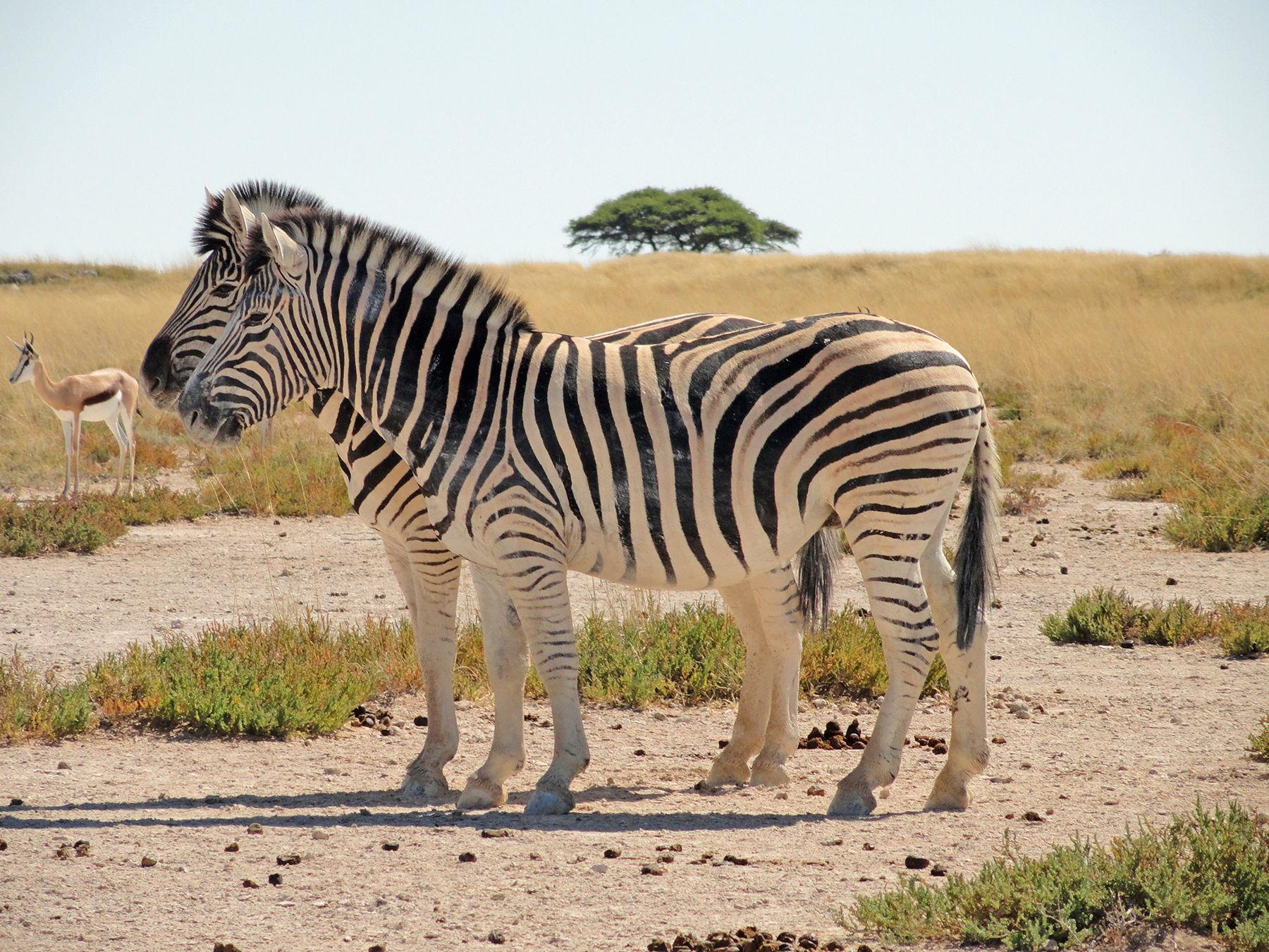Datierung in namibia windhoek